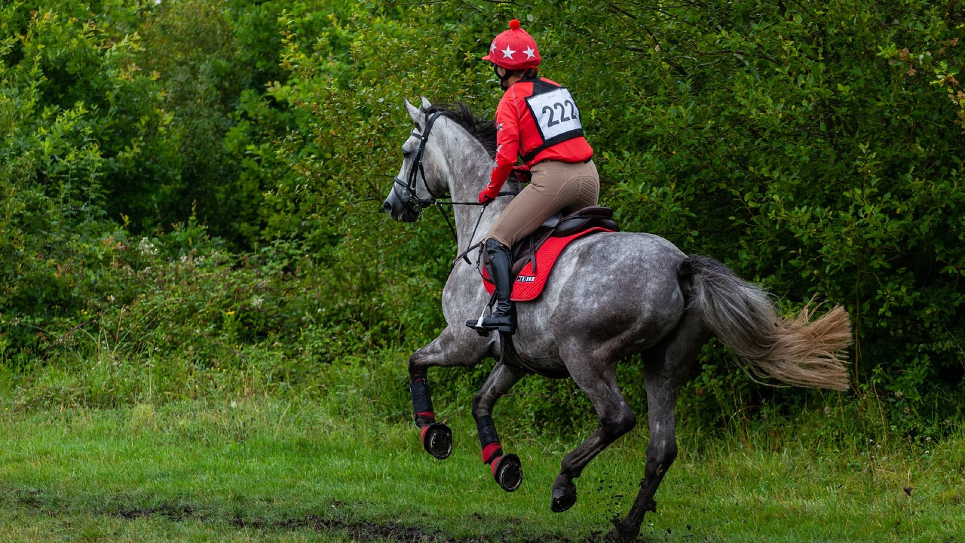 Equitation cross-country : les équipements à prévoir pour protéger le cavalier et son cheval