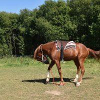 Tapis d équitation : faire le bon choix